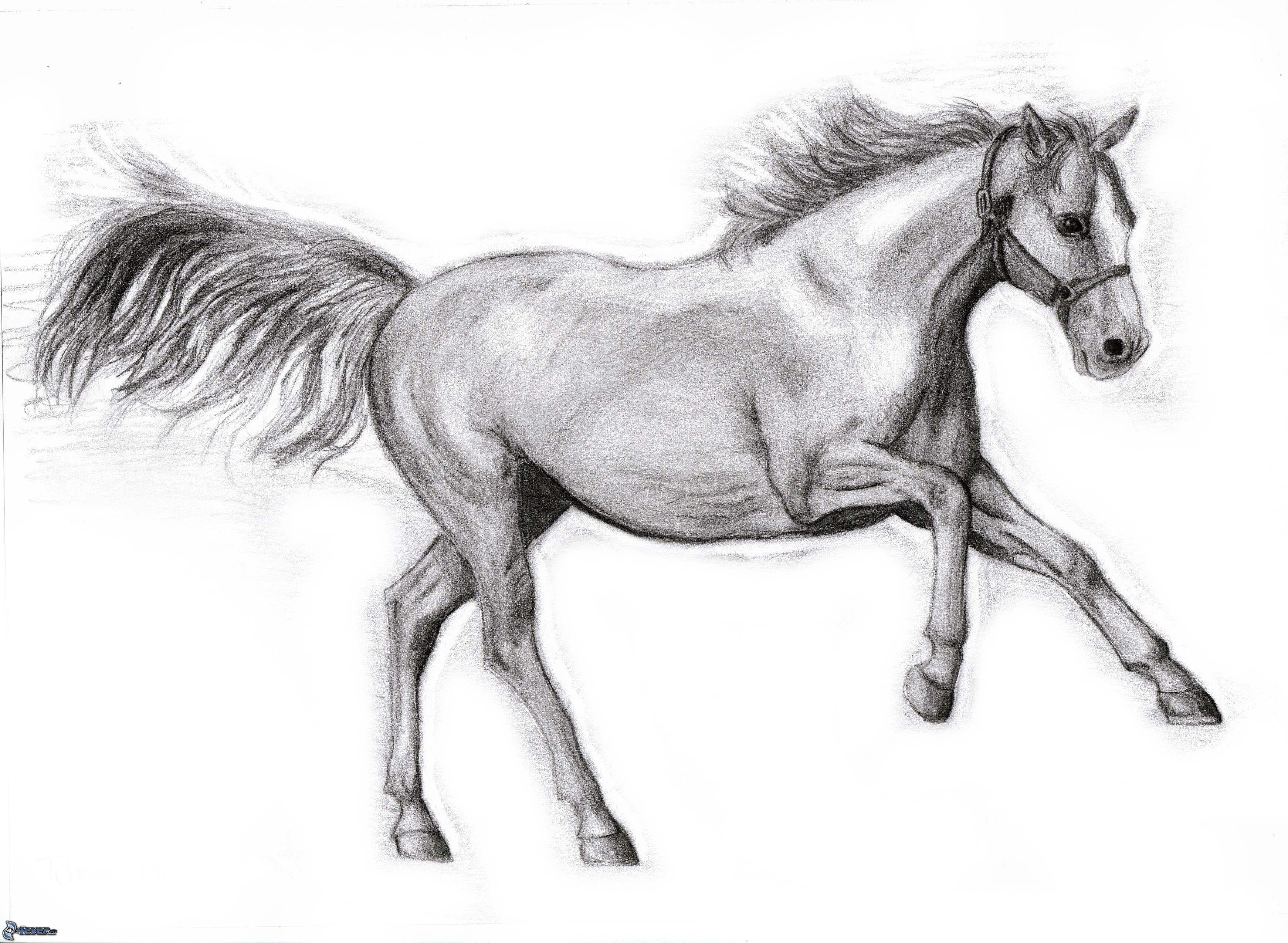 Tecknad h st - Dessin de cheval magnifique ...